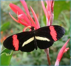 postman-butterfly-sm