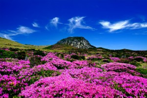 "The island of Jeju is known as the ""Hawaii of Korea."""