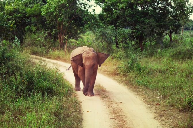 Elephant walking down a dirt road