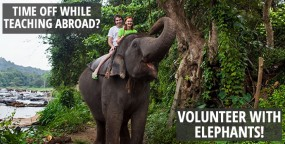 Time Off While Teaching Abroad? Volunteer With Elephants!