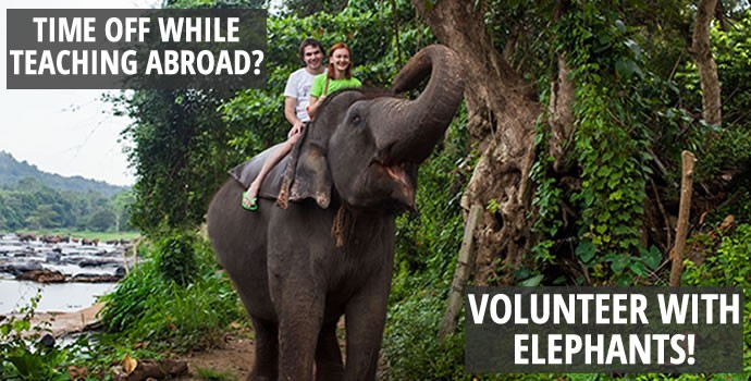 Friends riding elephant abroad