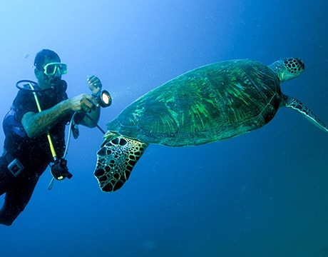 Sea Turtles in Oman